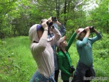Spotting the Black-and White Warbler