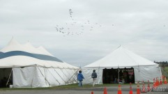 Canadian Geese over the display tents