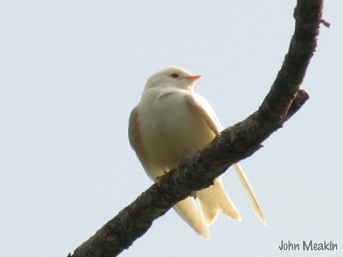 Albino6-30-14