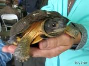 Live turtle on display