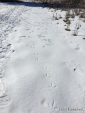 A Wild Turky trail